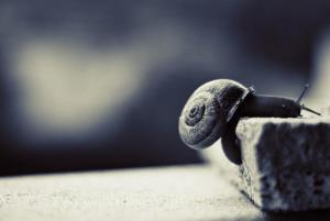 caracol solitario
